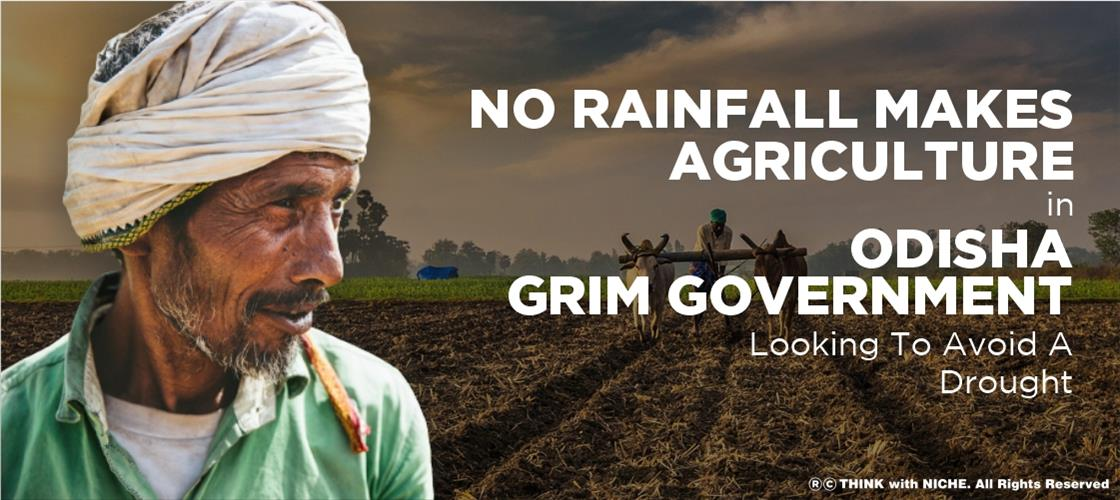 no-rainfall-makes-agriculture-in-odisha-grim-government-looking-to-avoid-a-drought